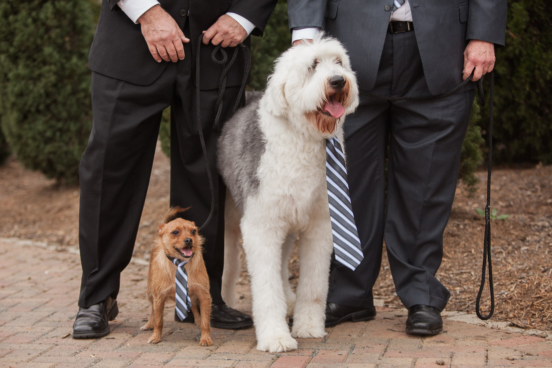 wedding dogs with ties